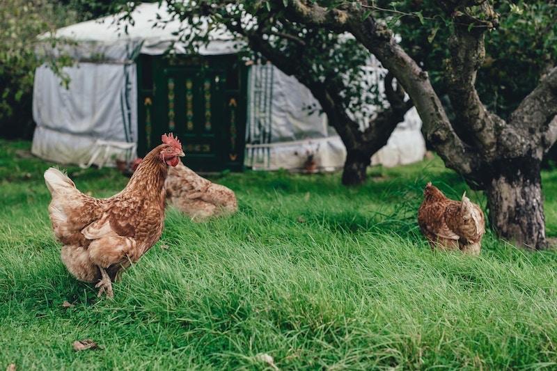 L'uovo, un alimento prima demonizzato e poi rivalutato