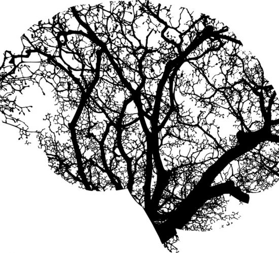 La straordinaria plasticità del nostro cervello