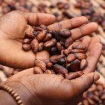 Benefici del cacao crudo, il cibo degli dei
